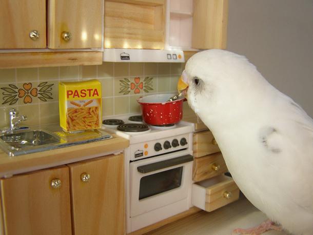 02.05.10_japanesebirdcookingspaghetti