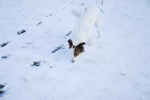 White Dog, White Snow