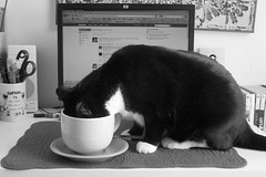 coffee! (dotpolka) Tags: morning bw silly home coffee cat newjersey jerseycity coffeecup meadow