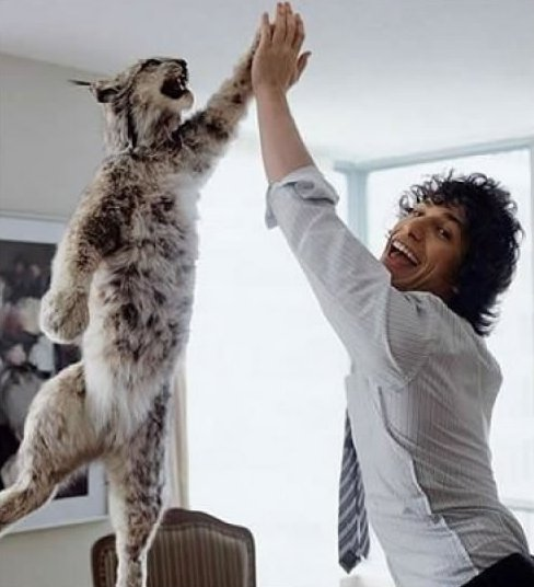 88-andy-samberg-hi-fives-a-bobcat