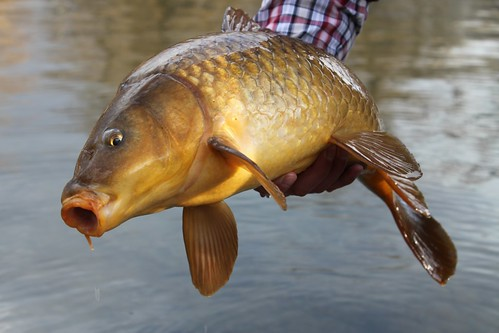 Angler: Matthew Warner