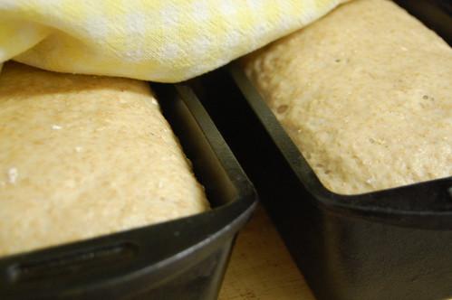 homemade bread (dough)