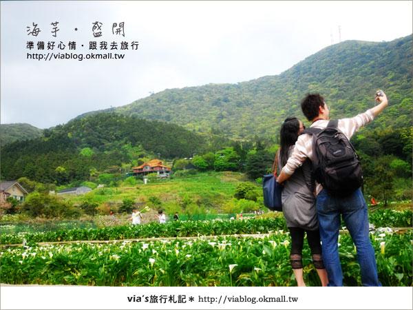 【2010竹子湖海芋季】陽明山竹子湖海芋季~海芋盛開囉!30