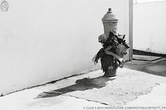 HYDRANT TMAX 100 17_17 (Cortez77_fr same nickname on Ipernity) Tags: camera sun white black classic film wall hydrant concrete 50mm tmax decay anniversary cosina voigtlander bessa rangefinder plastic negative firehydrant 100 f2 expired rf heliar r2m 250years