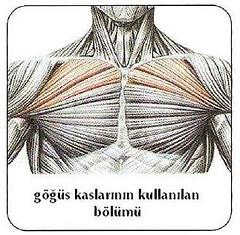 göğüs kasının çalışan bölümleri