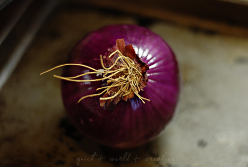 first day of spring: an onion