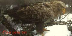 Cães - Caça - Pesca - Natureza - Portal 4473311232_4b5b8b1e66_m