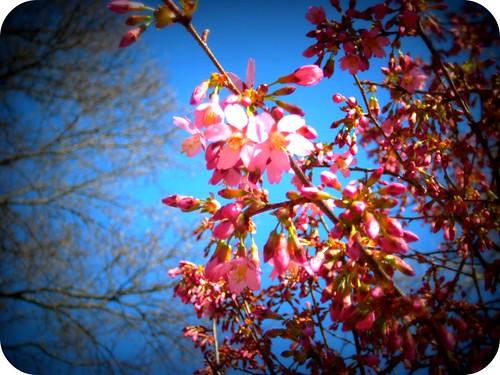 Spring! part 2