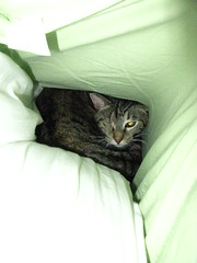 Maggie tucked down between some pillows