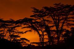 [フリー画像] [自然風景] [樹木の風景] [夕日/夕焼け/夕暮れ]        [フリー素材]