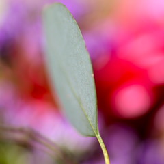 Little focus (kevin dooley) Tags: red plant blur color green field canon eos leaf focus little small sigma tiny subject leafy bit depth f28 amount redbackground 105mm 40d plantware greenforeground
