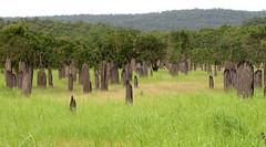 Termite Tombstones