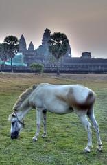Horse, Angkor Wat, Cambodia