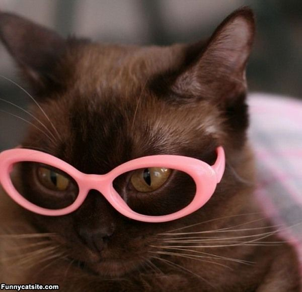 Pink_Glasses_Cat