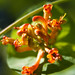 odd flowers in the medicinal herb garden