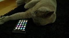 i love the Nokia N9