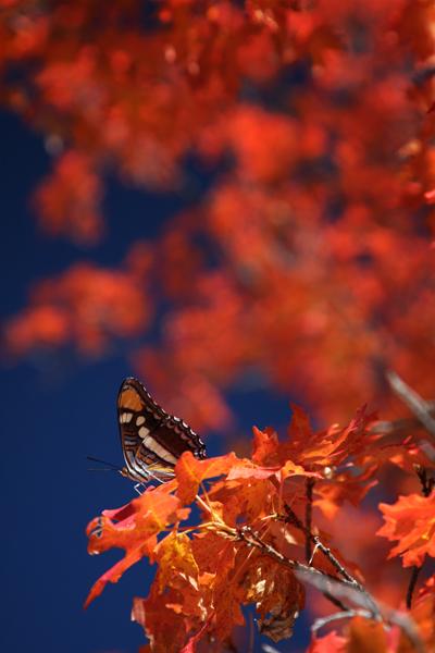 101609_butterfly2