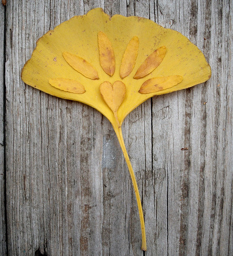 Daily Art inspiration 11/3/09- I heart ginkgo