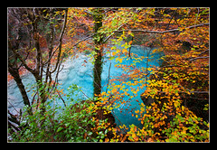 Udazkeneko koloreak (koldoc) Tags: autumn trees fall colors leaves rio river hojas arboles colores otoo euskalherria basquecountry haya navarra pasvasco ramas adarrak pagoa nafarroa zuhaitzak urederra urbasa udazkena koloreak ibai hostoak efs1022mmf3545usm eos40d bakedao amezkoabehekoa