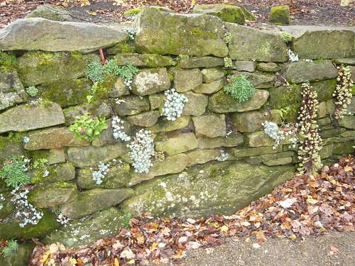Drystone Wall Garden