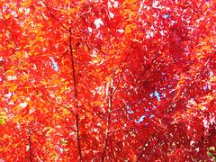 Fall Colors Boulder   DSCN0271