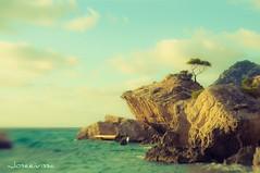 El arbol - Ibiza 2009 Eivissa - Lensbaby (Joseeivissa) Tags: sea españa tree beach lensbaby sunrise landscape arbol islands mar spain nikon mediterranean mediterraneo playa paisaje des amanecer ibiza es eivissa lente islas cala niu composer platja aguila balearic espanya d90 pitiuses cubells illes pitiusas pentaxman paisatje descentrable oscaribiza joseeivissa soybuscador joseeivissafotosgmailcom