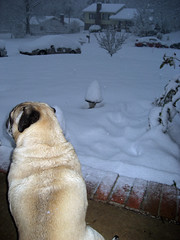 norman watches the snow
