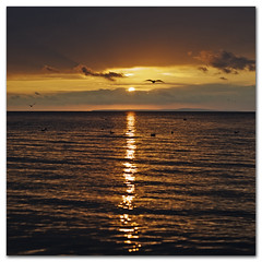 Golden evening light (s0ulsurfing) Tags: ocean autumn light shadow sea sky sun sunlight seagulls seascape bird texture beach water bronze dark island gold golden evening bay coast seaside twilight october solitude skies quiet peace darkness sundown dusk gull gulls flight wide shoreline wideangle calm coastal shore serenity vectis isleofwight copper vista coastline ripples rays gliding isle 2009 nube soar wight purbeck meteorology nephology glide 10mm totland isleofpurbeck sigma1020 totlandbay s0ulsurfing coastuk vertorama crespucular trainedgulls
