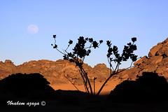 Mon in The Nature (Azaga ) Tags: desert libya gat    sebha ibrahem   azaga akakos acacos