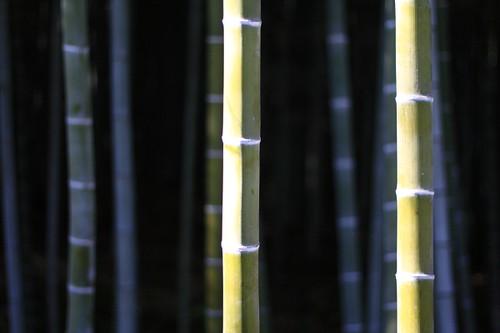 Bamboo Grove in Arashiyama, Kyoto