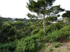 Vue du hameau de Ciappili dans la descente vers le départ du sentier de Sperone