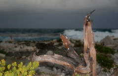 Tree Branch and Snails in Akumal