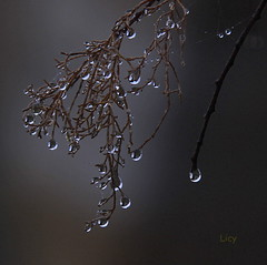 GOTAS DE MELANCOLÍA (Licy (Iris de Paz)) Tags: naturaleza gotas zamora tff1