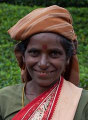 Teapickers, Nuwara Eliya District (bjornra) Tags: tea srilanka tamil teapicker