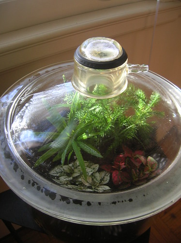 Glass Terrarium with lid in sunlight