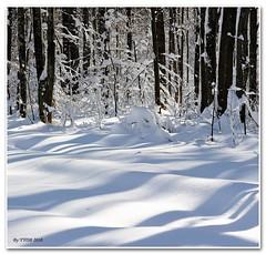 Snow 2010 Feb (YYDB) Tags: 2010 2470 winter2010 d700
