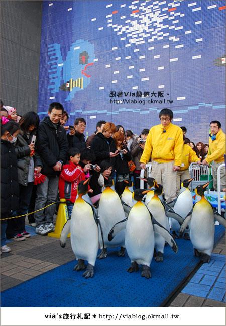 【via關西冬遊記】大阪海遊館~冬季限定!無敵可愛企鵝遊行來囉!16