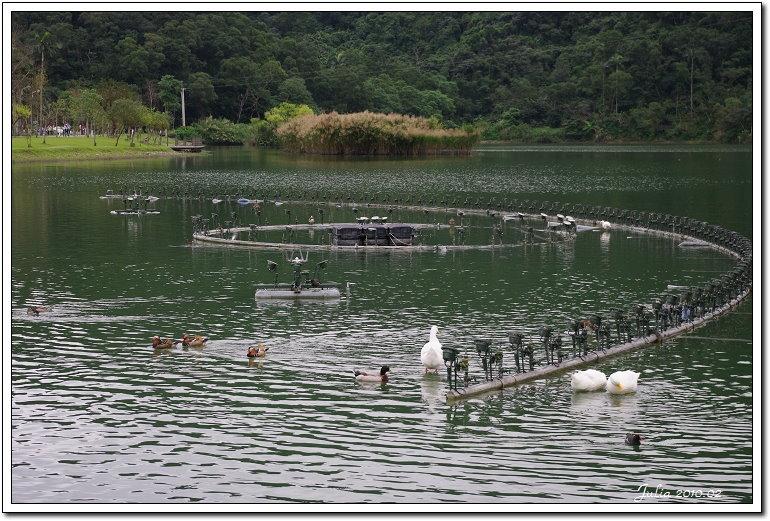 梅花湖 (3)