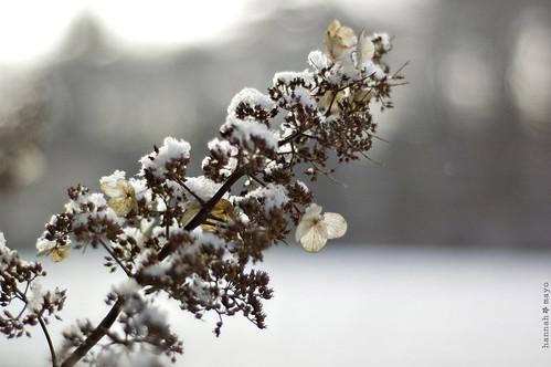 winter beauty, no.8