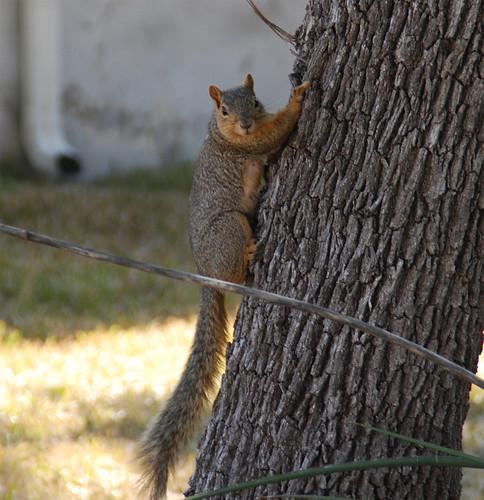 AHA-Squirrel-Trap