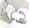Yawn (Tinx_Bestie_Dog) Tags: dog chihuahua scary yawn roar grr vicious