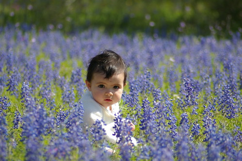 My girls in the bluebonnets, pt 2