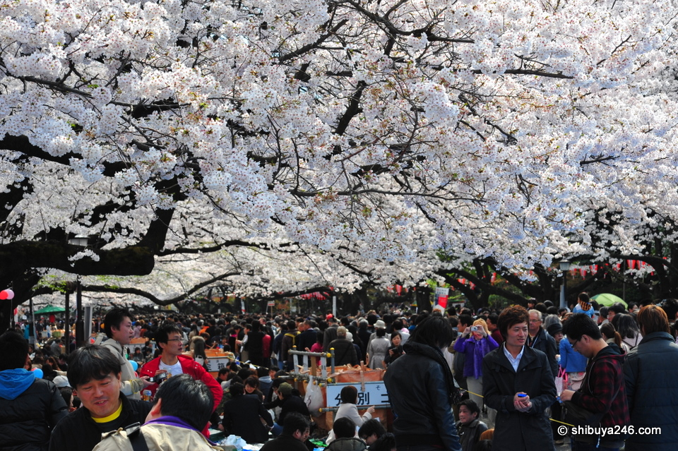 Japanese life under the Sakura wave