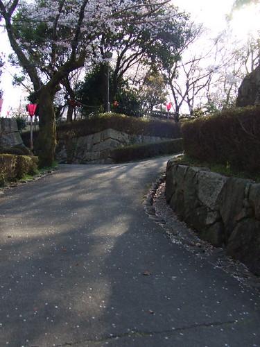 大竹 亀居公園 桜 画像 4