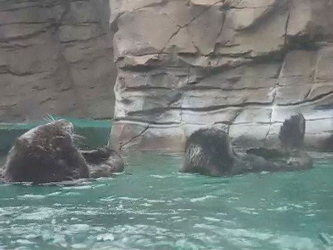 Clean otters
