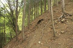 大タビ山に登る斜面