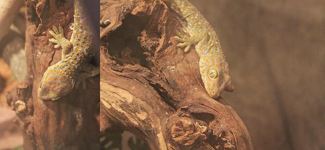 MODS gecko diptych