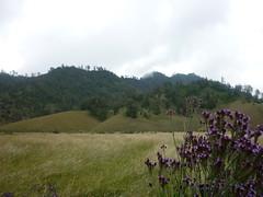 P1030394 (fajar p. yuwono) Tags: mountain volcano hiking mount semeru ranupane mahameru ranukumbolo
