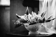 ... (AlexEdg) Tags: flowers bw stilllife texture 50mm 50mmf14 lilyofthevalley 2011 50mmf14g alexedg alledges nikond300