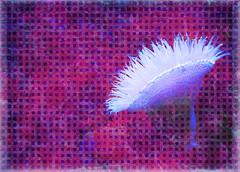 Flower of the Sea (Anemone) (bethrosengard) Tags: bethrosengard photomanipulation digitallyenhanced photoart digitalmagic digitalart
